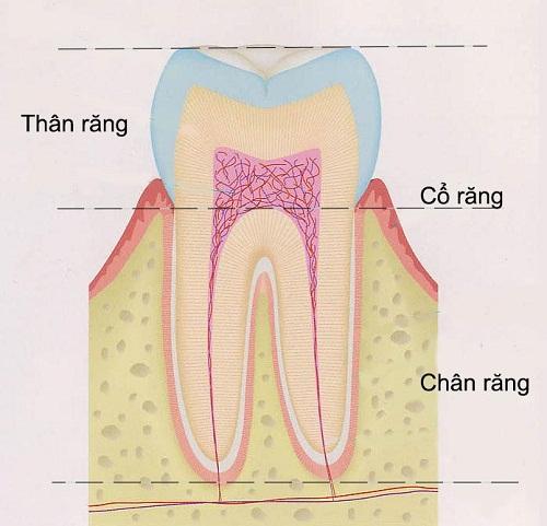 [Chữa sâu răng]: Có nên bọc răng sâu không ? 1